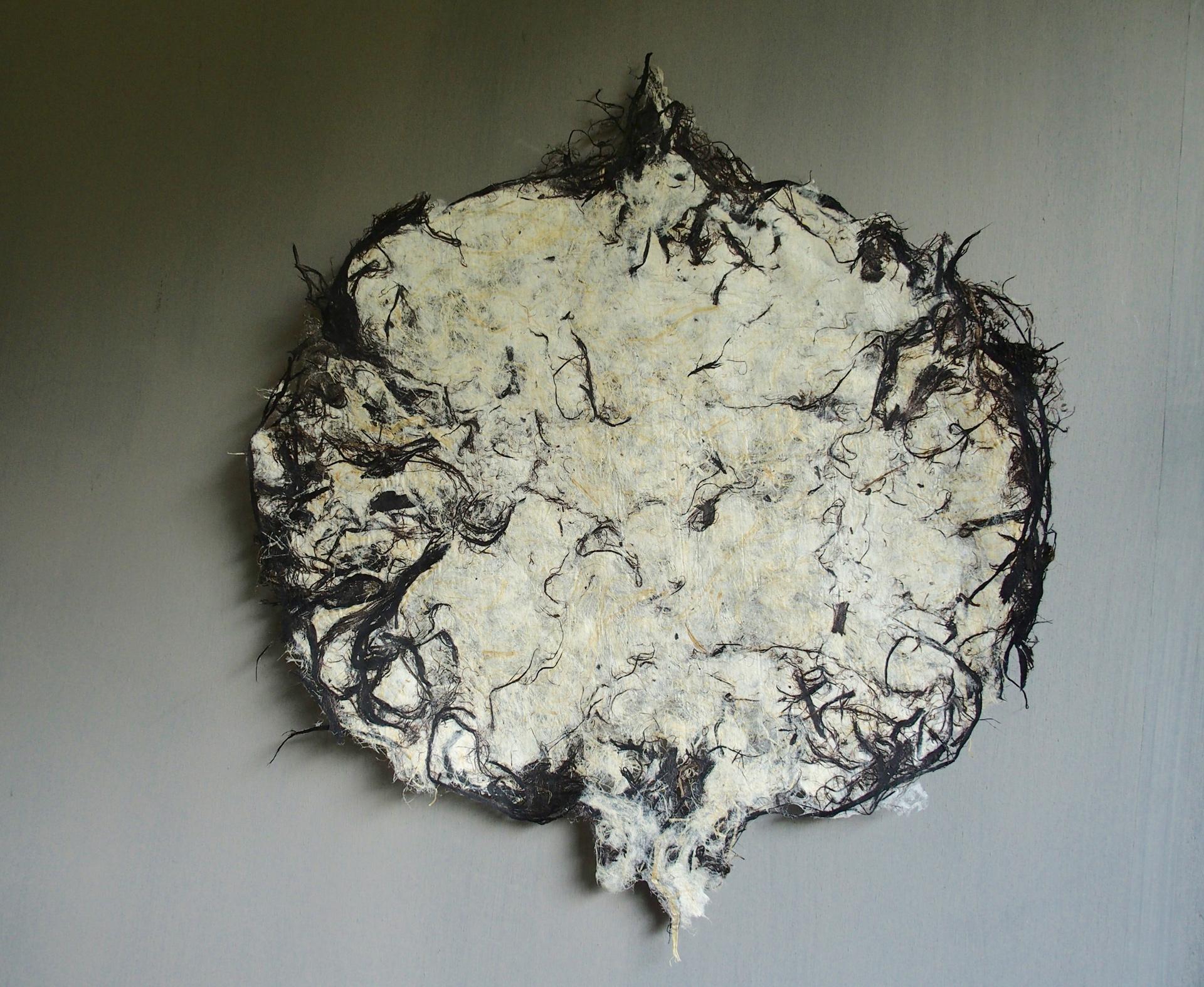 Cosmos Blanc